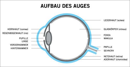 Aufbau Des Auges Augenlaserklinik Wien